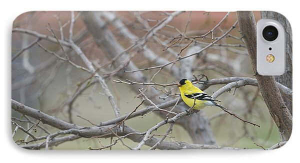 American Goldfinch 1 IPhone Case