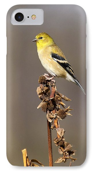 American Goldfinch 9 IPhone Case by David Lester