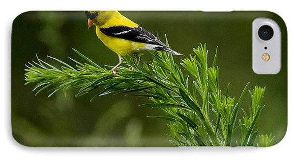 IPhone Case featuring the photograph American Goldfinch Delight by David Lester