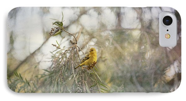 American Goldfinch In Winter Plumage Phone Case by Angela A Stanton