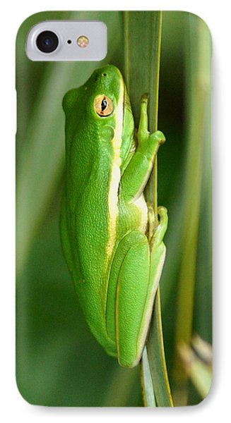 American Green Tree Frog IPhone Case