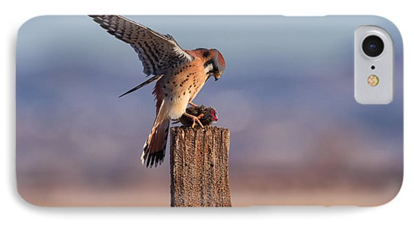 American Kestral IPhone Case by Scott Warner
