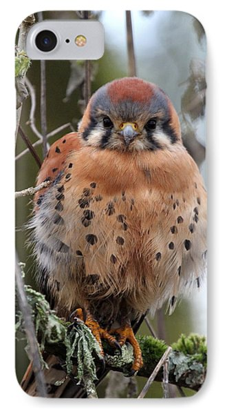 American Kestrel IPhone Case