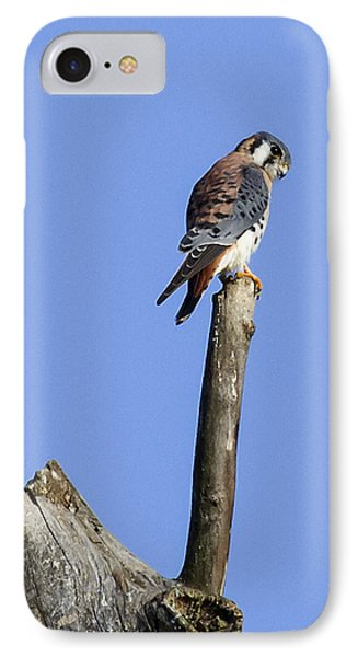 American Kestrel IPhone Case by David Lester