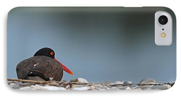 American Oystercatcher IPhone Case by Brian Magnier