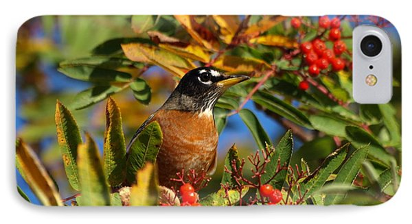 American Robin IPhone Case by James Peterson
