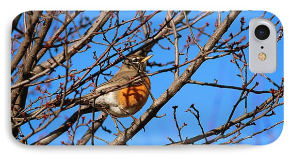 IPhone Case featuring the photograph American Robin by Rima Biswas
