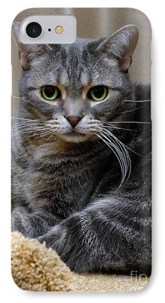 American Shorthair Cat Portrait IPhone Case by Amy Cicconi