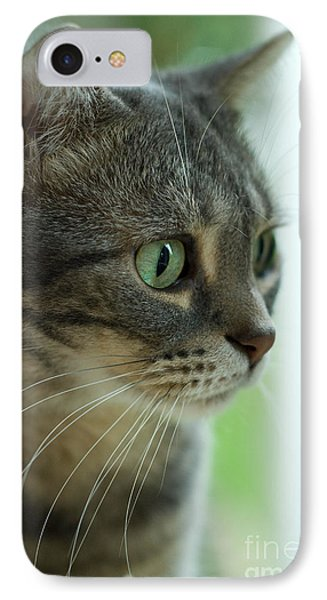 American Shorthair Cat Profile Phone Case by Amy Cicconi