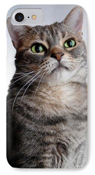 American Shorthair Portrait IPhone Case by Amy Cicconi