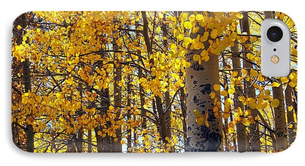 Among The Aspen Trees In Fall IPhone Case