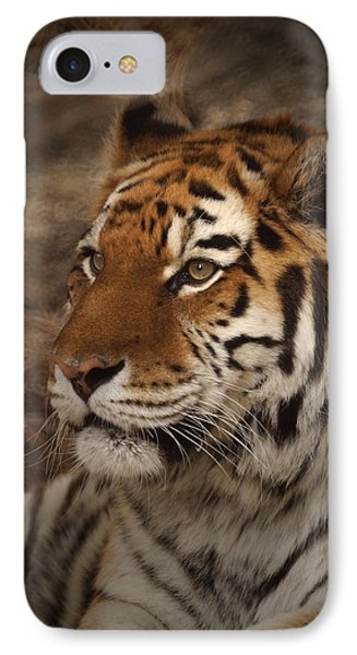 Amur Tiger 2 IPhone Case