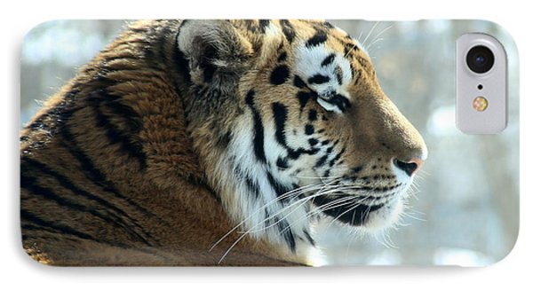 Amur Tiger Portrait IPhone Case