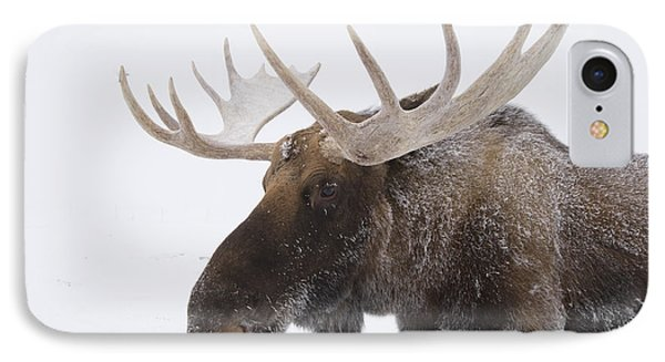 An Elk Cervus Canadensis With Snow IPhone Case by Doug Lindstrand