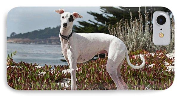 An Italian Greyhound Standing IPhone Case by Zandria Muench Beraldo