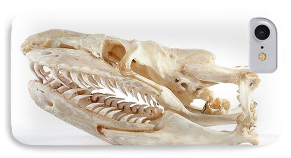Anaconda Skull IPhone Case
