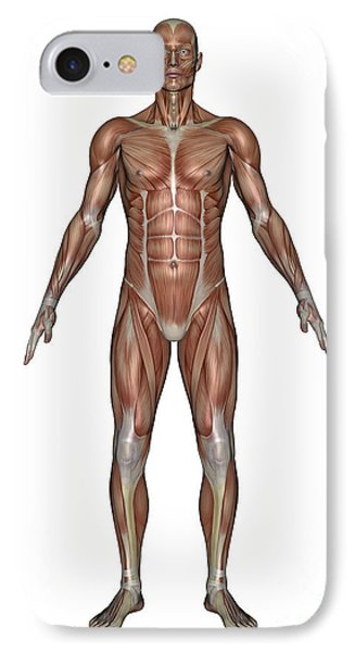 Anatomy Of Male Muscular System, Front Phone Case by Elena Duvernay
