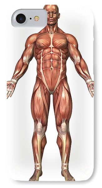 Anatomy Of Male Muscular System, Front Phone Case by Stocktrek Images