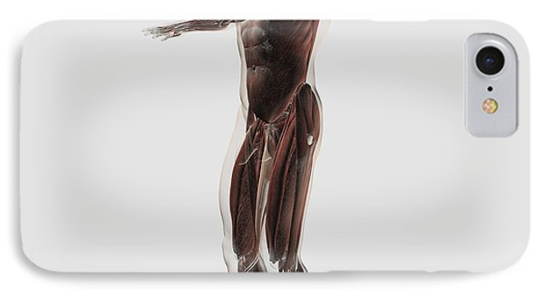 Anatomy Of Male Muscular System, Side Phone Case by Stocktrek Images