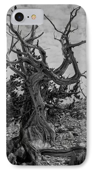 Ancient Bristlecone Pine IPhone Case