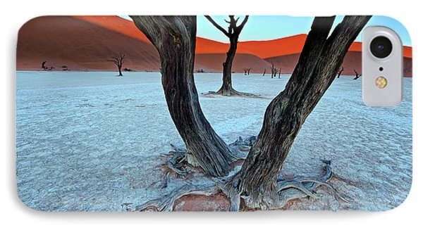 Ancient Trees In The Vlei IPhone Case
