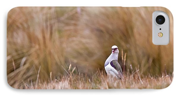 Andean Lapwing IPhone Case
