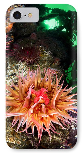 Anemone Feeding IPhone Case