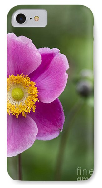 Anemone IPhone Case by Tim Gainey