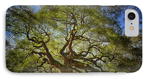 Angel Oak IPhone Case by Carrie Cranwill