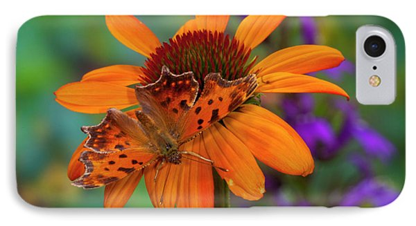 Angle Wing Butterfly On Cone Flower IPhone Case by Darrell Gulin