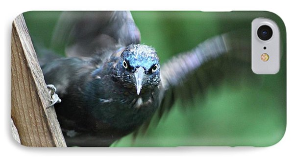 IPhone Case featuring the photograph Angry Bird by Michaela Preston