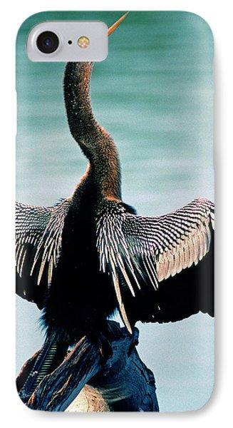 Anhinga Anhinga Anhinga Drying Feathers IPhone Case