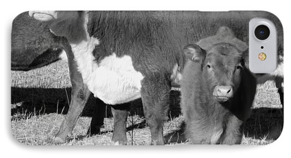 Animals Cows The Curious Calf Black And White Photography Phone Case by Ann Powell