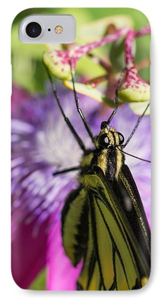 Anise Swallowtail Butterfly And Passionflower IPhone Case by Priya Ghose