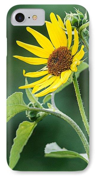 Annual Sunflower IPhone Case
