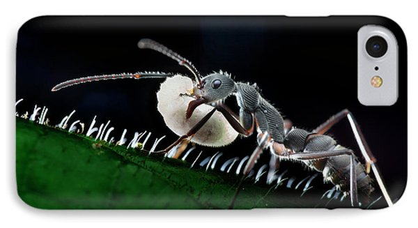Ant Carrying Larva IPhone Case by Melvyn Yeo