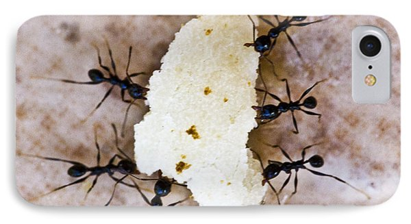 Ant Joint Venture IPhone Case by Heiko Koehrer-Wagner