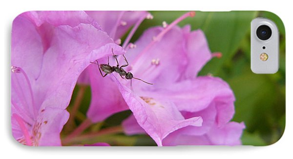 Ant On Flower IPhone Case by Jane Ford