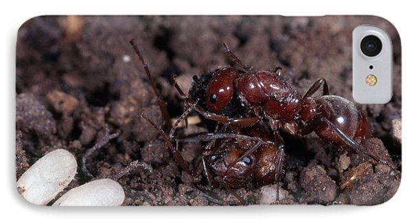 Ant Queen Fight IPhone Case by Gregory G. Dimijian, M.D.