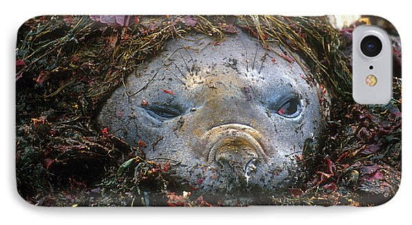 IPhone Case featuring the photograph Antarctic Elephant Seal by Dennis Cox WorldViews