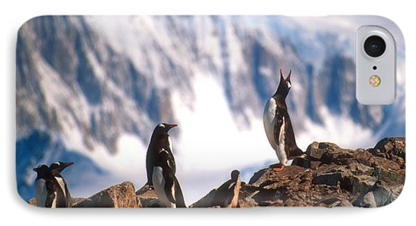 IPhone Case featuring the photograph Antarctic Gentoo Penguins by Dennis Cox WorldViews