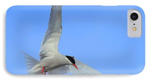 Antarctic Tern Phone Case by Tony Beck