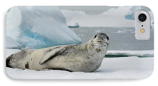 Antarctica Charlotte Bay Leopard Seal IPhone Case by Inger Hogstrom
