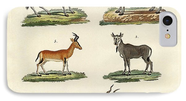 Antelopes And Gazelles IPhone Case by Splendid Art Prints