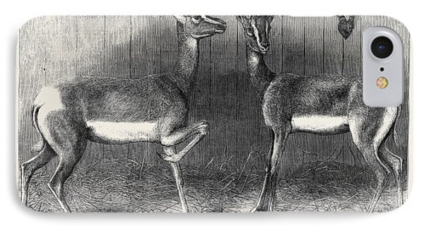 Antelopes From Soudan In The Gardens Of The Zoological IPhone Case by English School