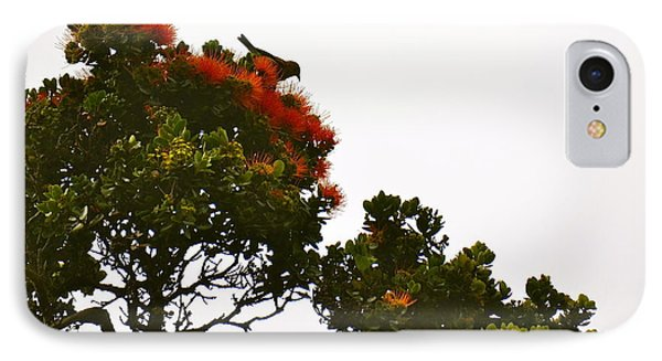 Apapane Atop An Orange Ohia Lehua Tree  IPhone Case by Lehua Pekelo-Stearns
