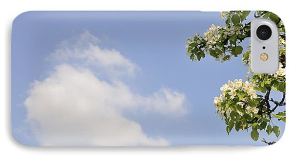 Apple Blossom In Spring Blue Sky Phone Case by Matthias Hauser