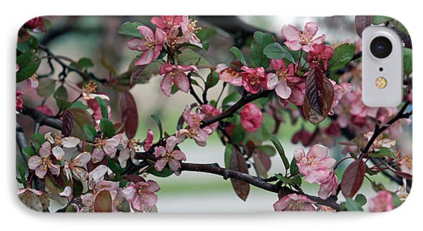 IPhone Case featuring the photograph Apple Blossom Time by Kay Novy