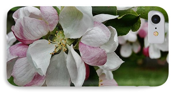 Apple Blossoms 2 IPhone Case by VLee Watson
