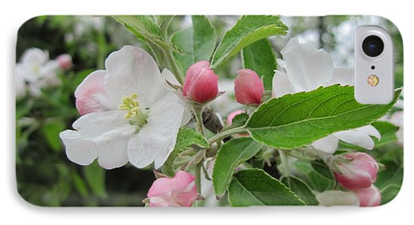 Apple Blossoms And Buds IPhone Case by Patricia E Sundik